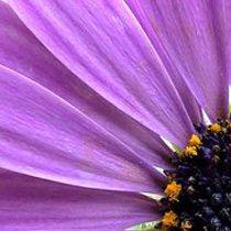 Фиолетовый цвет для ребёнка