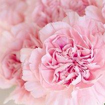 Розовый цвет для ребёнка