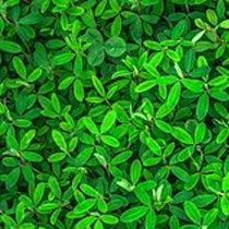 Зелёный цвет для ребёнка