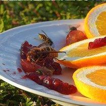 Пчёл и ос обходите стороной